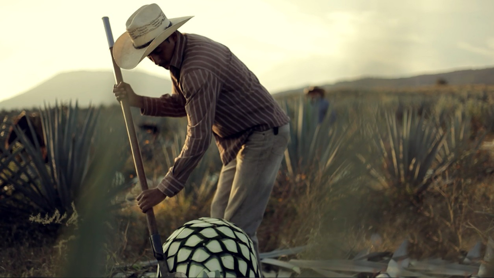 jimadore-harvesting-agave-for-tequila.png
