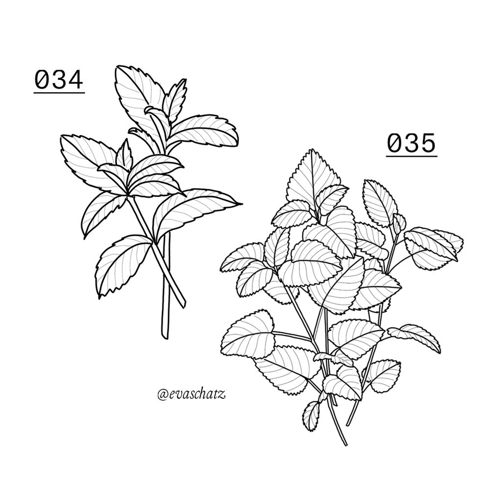 Copy of Mint Flower, Blumen Tattoo, Eva Schatz, MINT CLUB Tattoo Salzburg