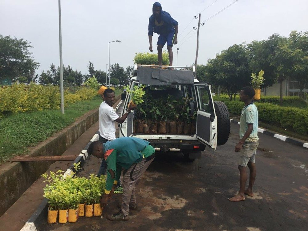 Collecting seedlings in the FGCF vehicle