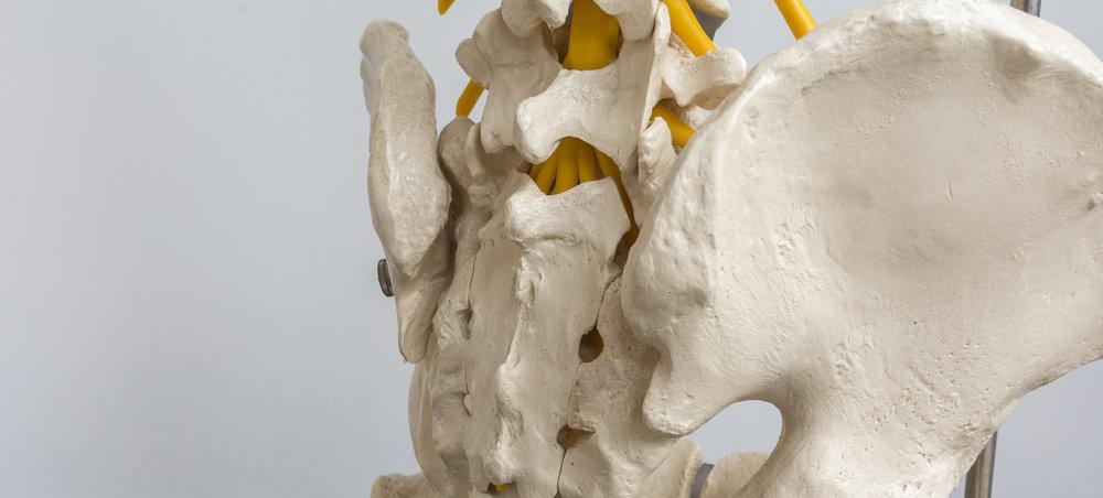Low spine.jpg
