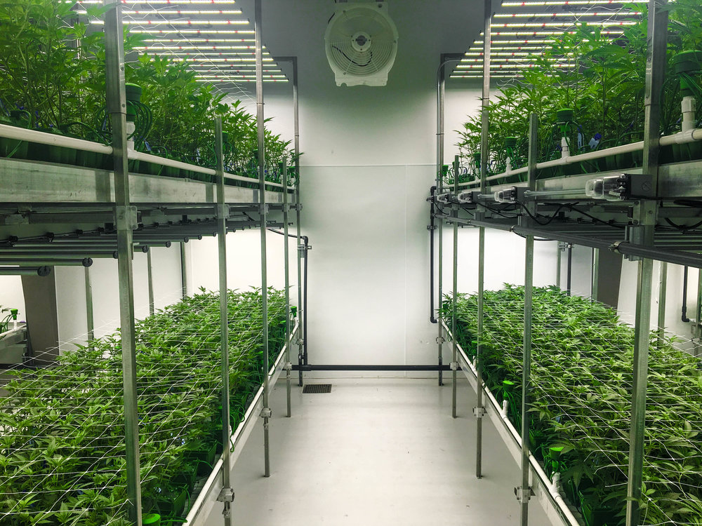 cannabisbenches