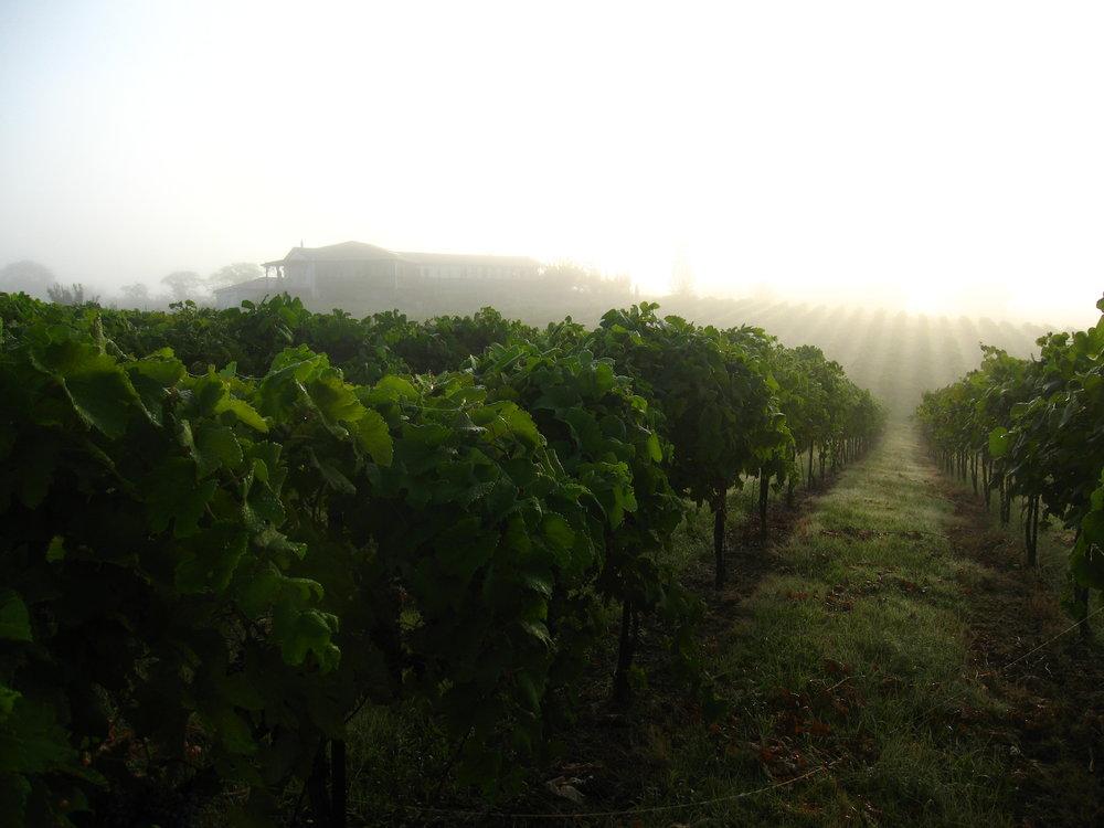 Vineyard_TerraVox.jpg
