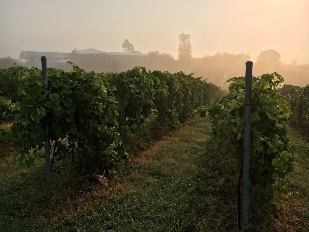 Our Vineyard - Explore our 100% estate-grown grapes and learn about out vineyard management philosophy.