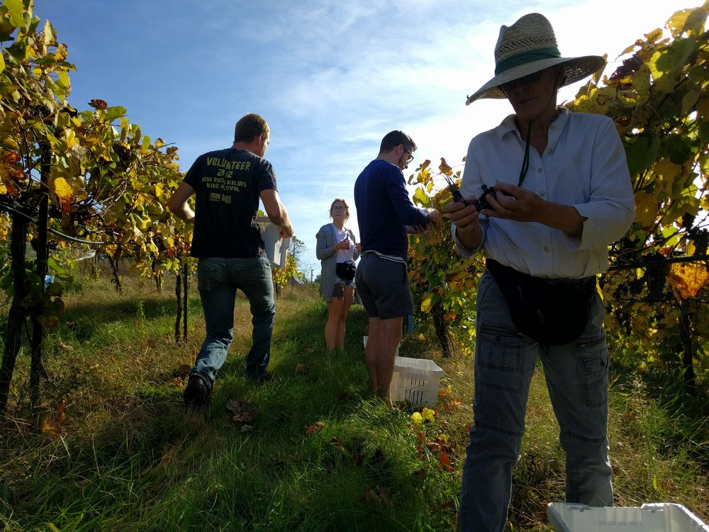 Harvest Days - Join us for a morning of grape picking complete with lunch and a wine tasting.