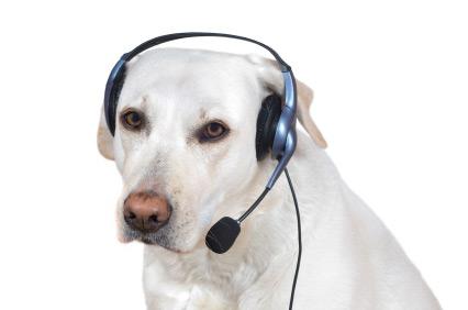dog_phone.jpg