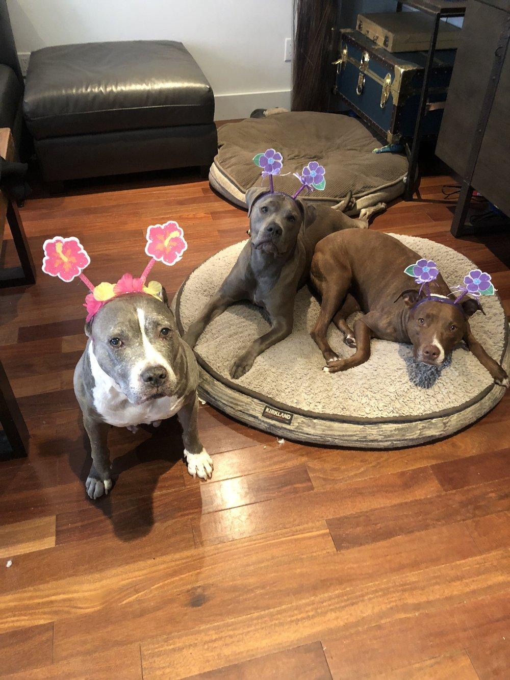 Sisters in their flower headbands