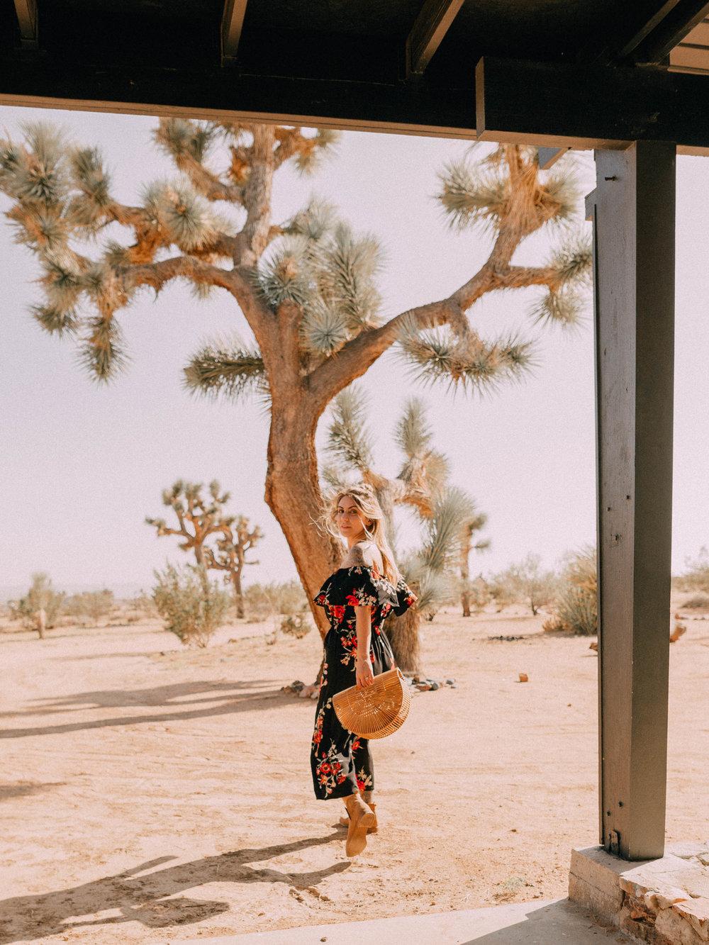 desert-dwelling-joshua-tree-12.jpg