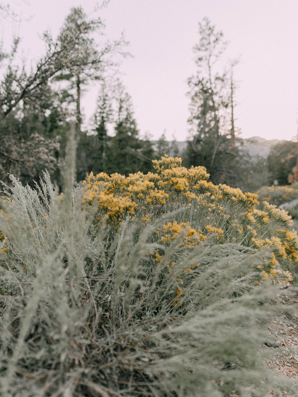 desertdwelling-wildflower-1