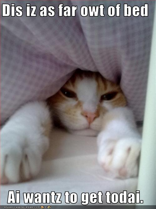 funny-pictures-cat-does-not-want-to-get-out-of-bed