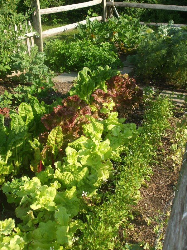 Dewey-Gardens-Cape-Cod-Vegetable-Garden.jpg