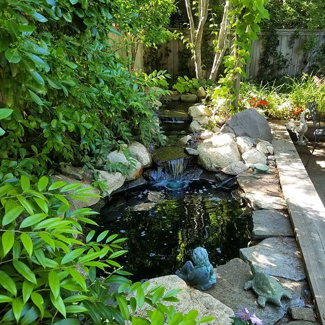 Pocket garden, water feature.  #landscapedesign #waterfeature #dgdesigninstall