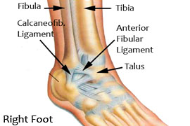 Ankle Ligaments.jpg