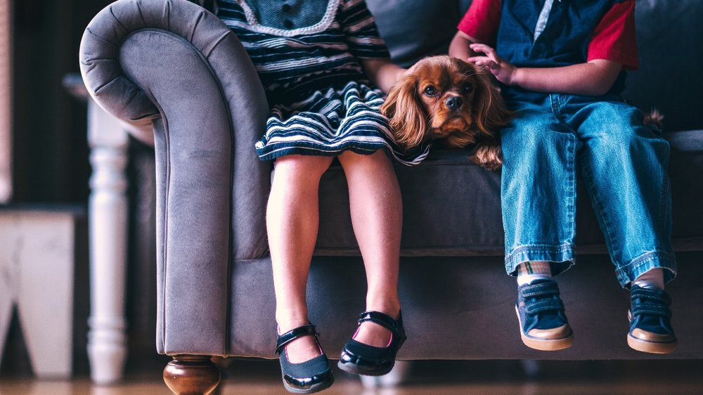 negative-space-boy-girl-puppy-sofa-andrew-branch.jpg