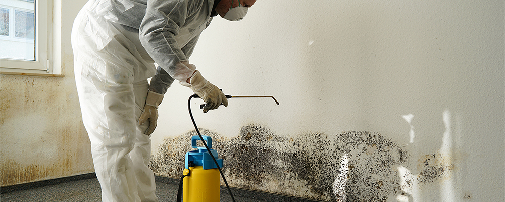 MOLD REMOVAL -
