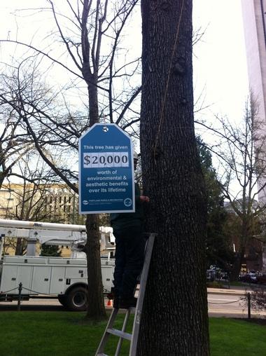 pricetagtree