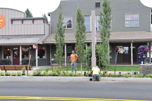 Columns of aspens lining the street will provide shade and invoke the regional landscape.