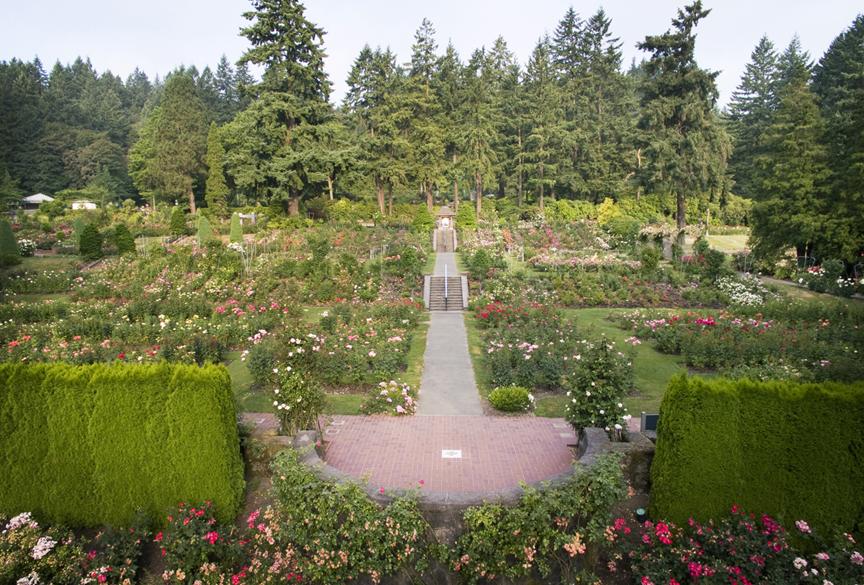 Rose_Garden_blog_post_shot