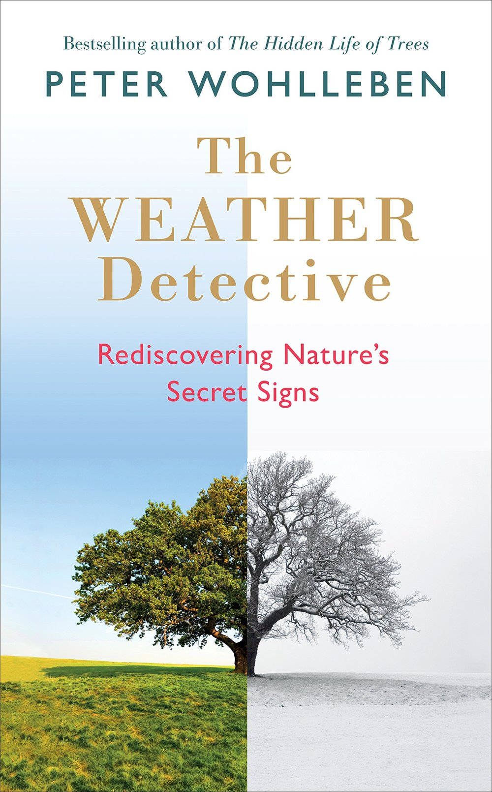 """The Weather Detective - by Peter Wohlleben""""The Weather Detective calls attention to patterns in weather and in the world to help readers connect with the natural environment. Wohlleben advocates for interacting with and observing nature from a broad atmospheric-scale down to the scale of your garden. This book also reminds us urban busy bodies to take pleasure in time spent outdoors and relaxing outside.""""- Margot Halpin, Landscape Designer"""