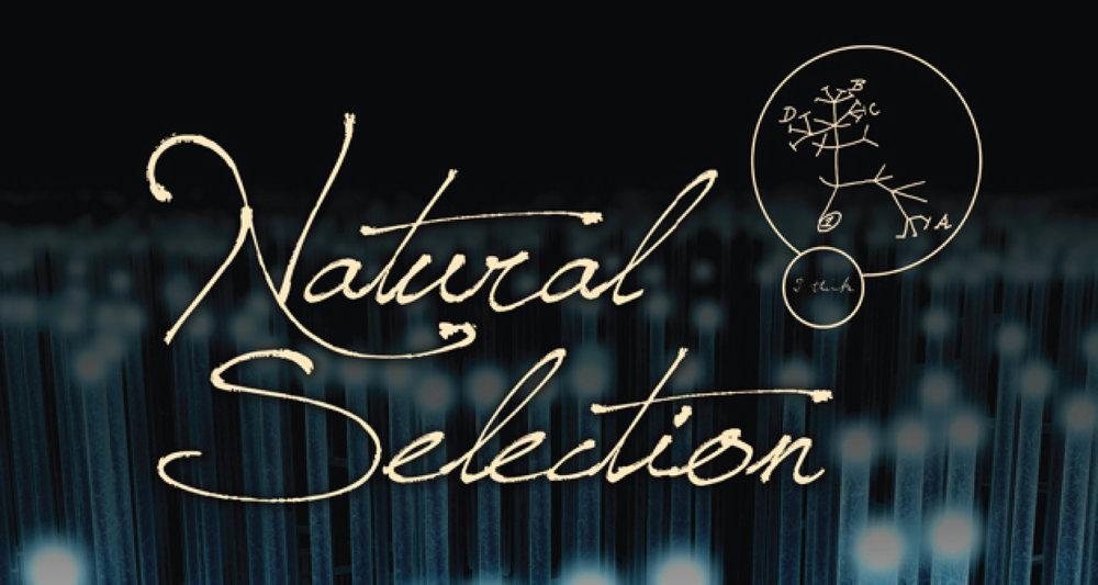 Natural-Selection.jpg