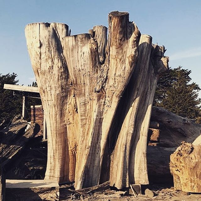 photo from last week's visit to Aborica in Tomales with fellow lumber yard enthusiast Viracocha ...a design pilgrimage all wood lovers must make at least once a year... #designhunting #mill #pilgrimage #sourcing #collaborate #chunkworld #designlife #evanshively #designlife #woodporn #blythedesignco