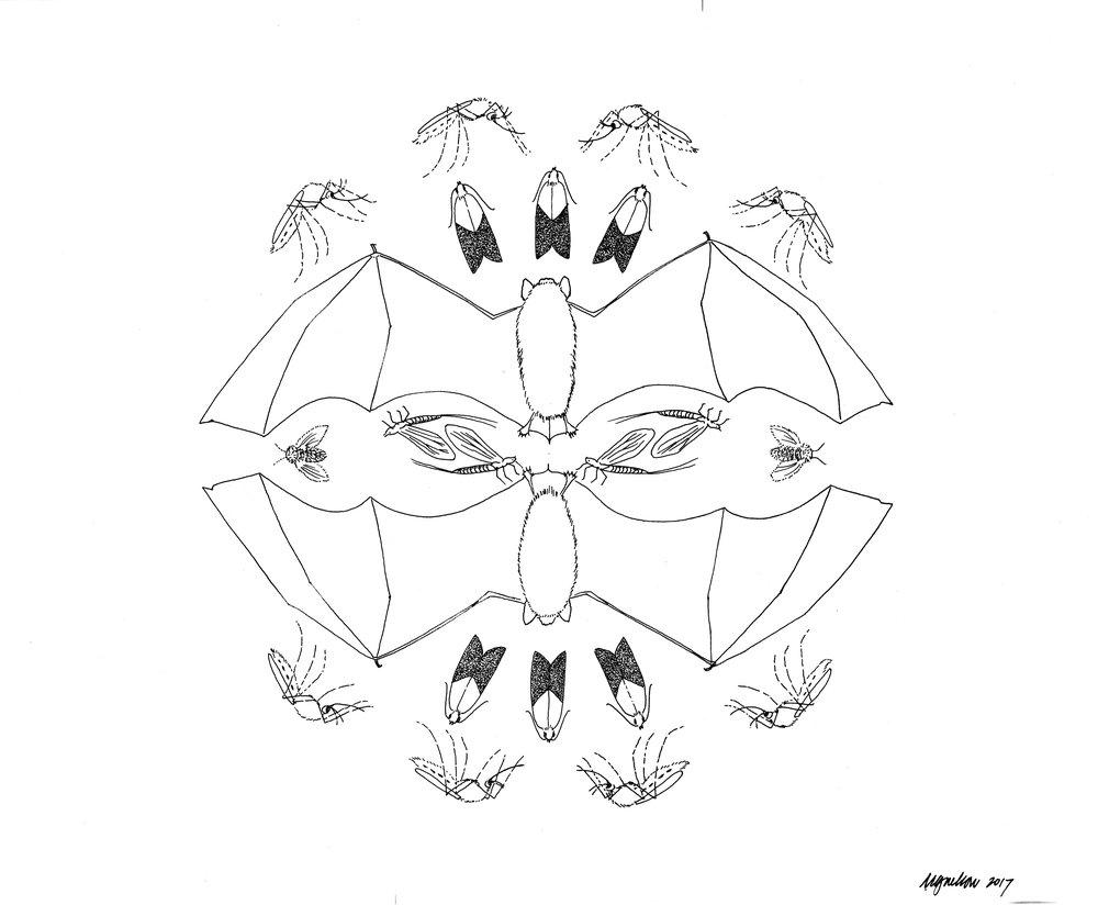 myotis bat food web.jpg