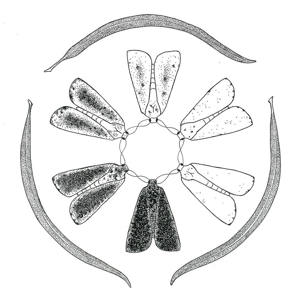 moth & willow.jpg