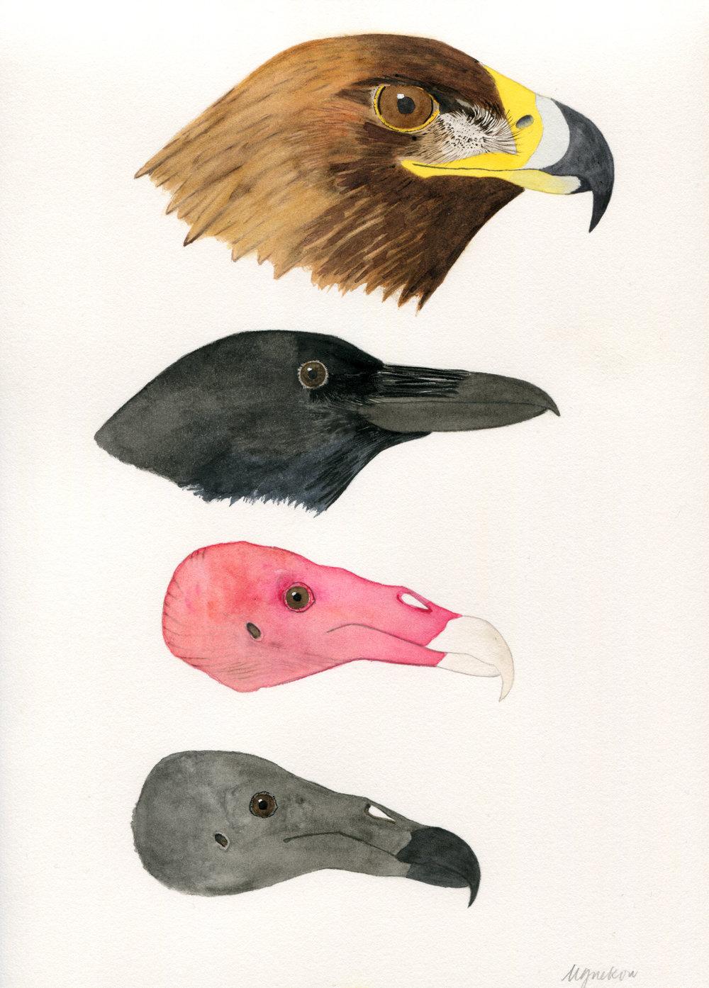 bird heads.jpg