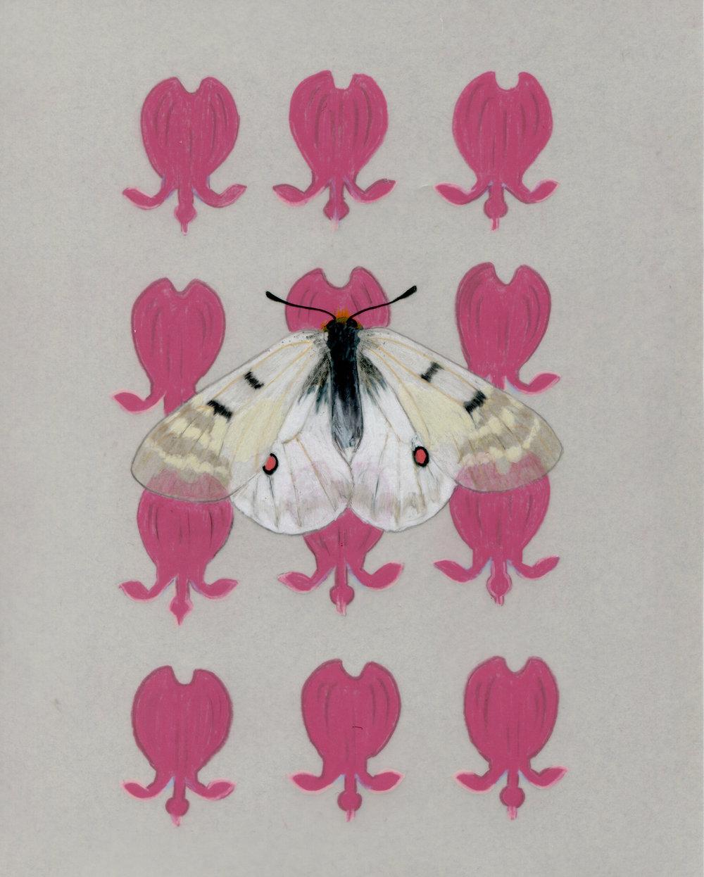 Parnassius clodius and Disecta formosa.jpg