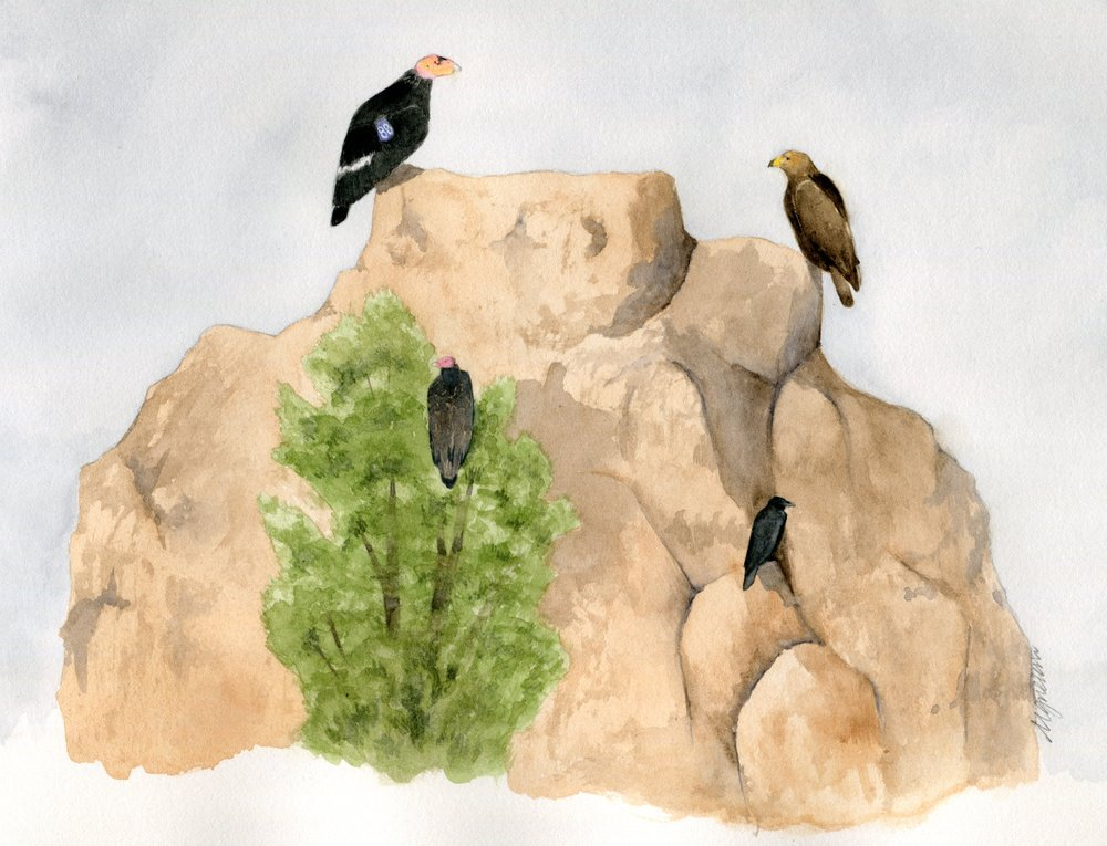 perched birds on rock.jpg