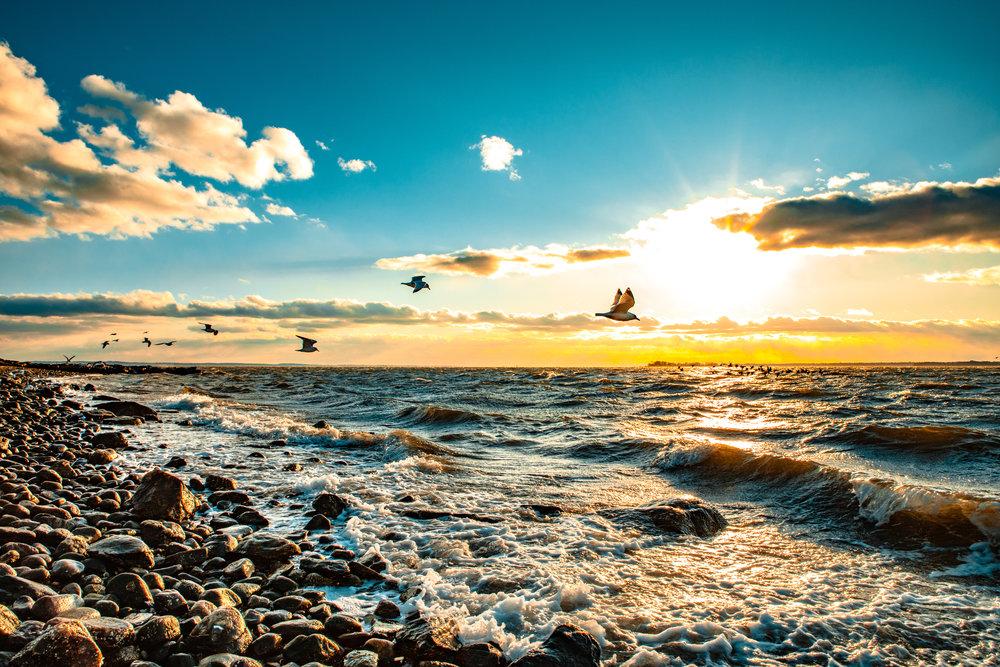 Sunset Tods Point Seagulls.jpg
