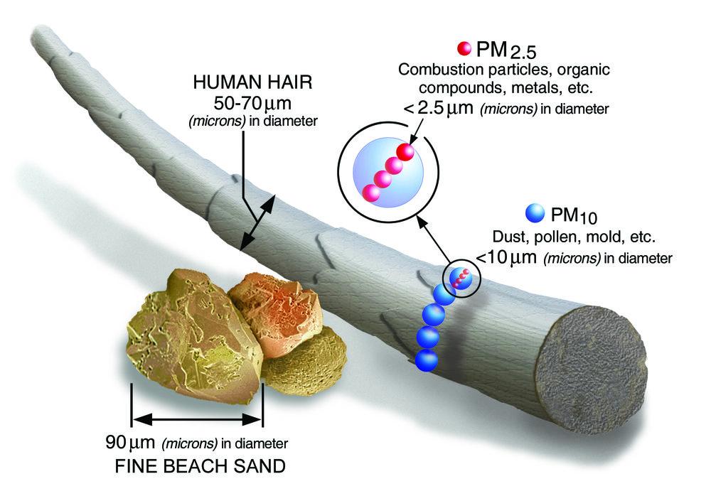 pollutant human hair.jpg