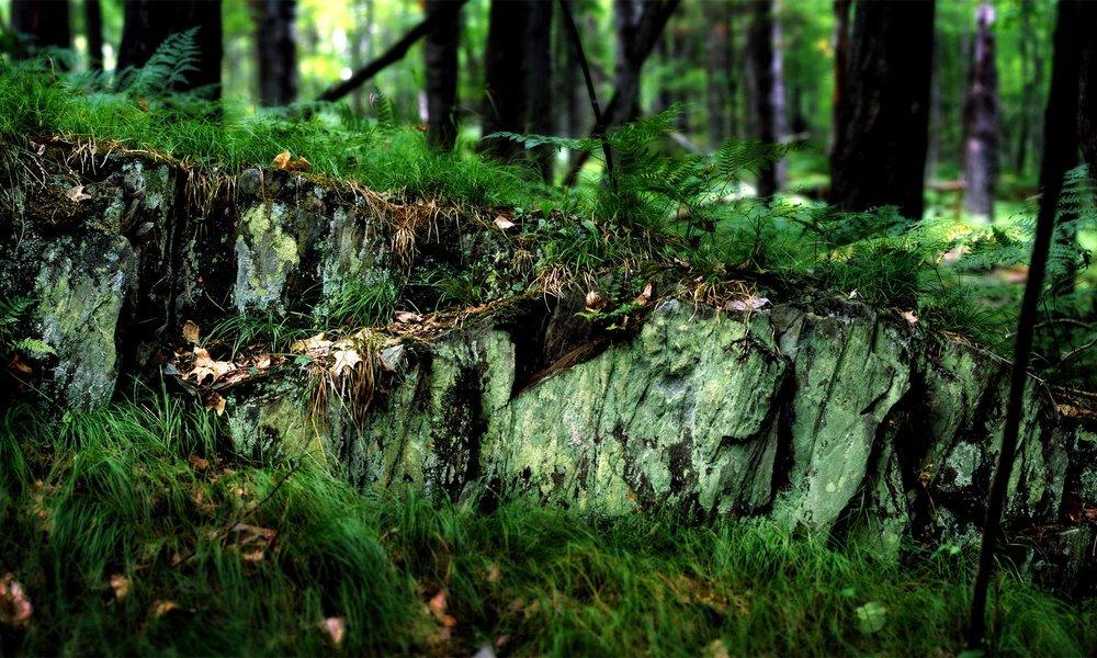 bg_forestfloor.jpg