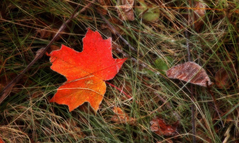 bg_autumnfrost.jpg