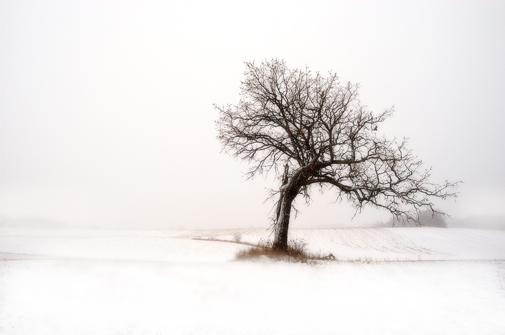 winter_oak.jpg