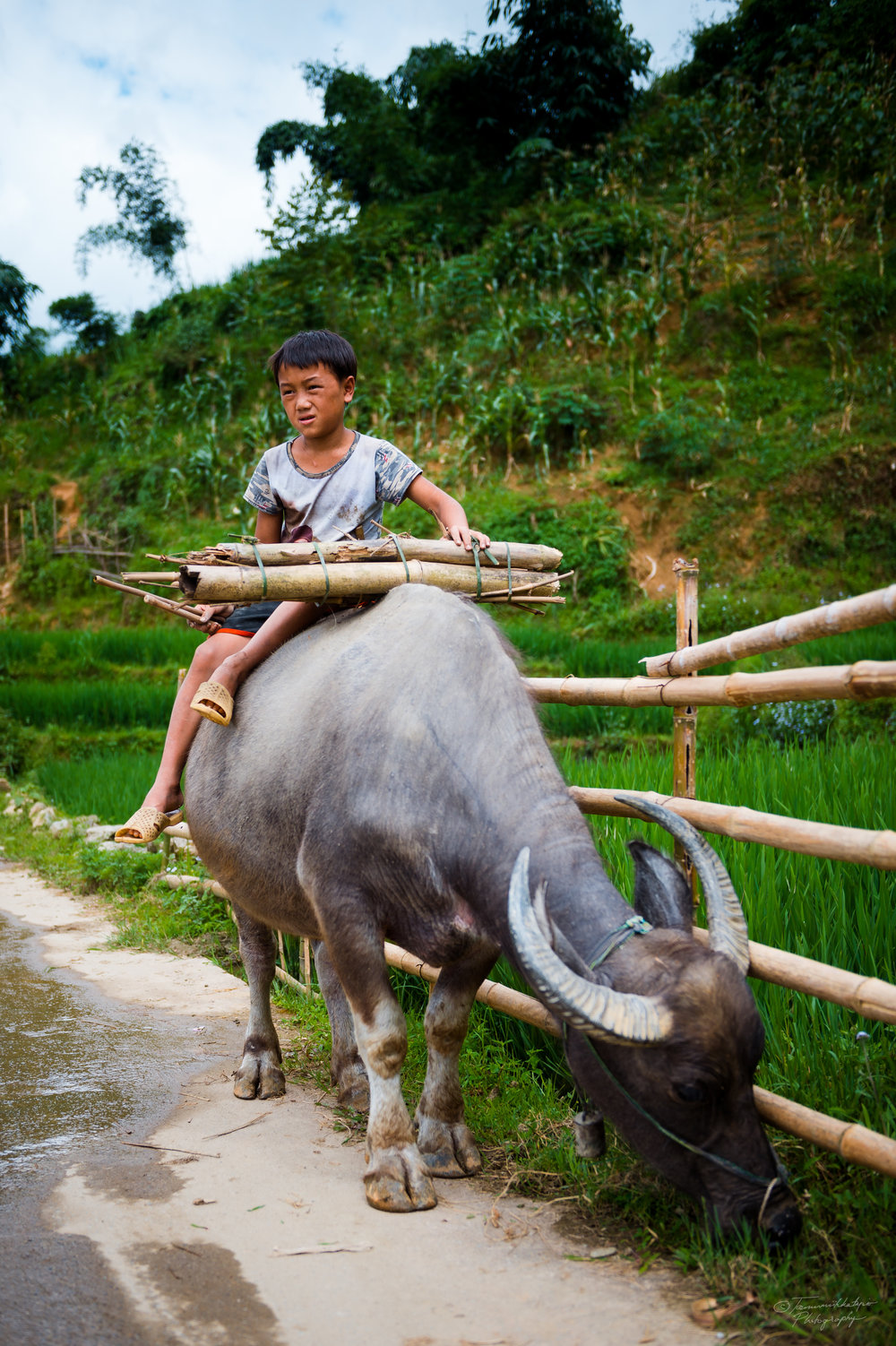 A young boy and his water buffalo