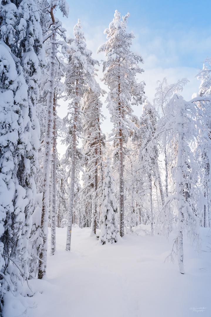 Southern Konnevesi National Park-9.jpg