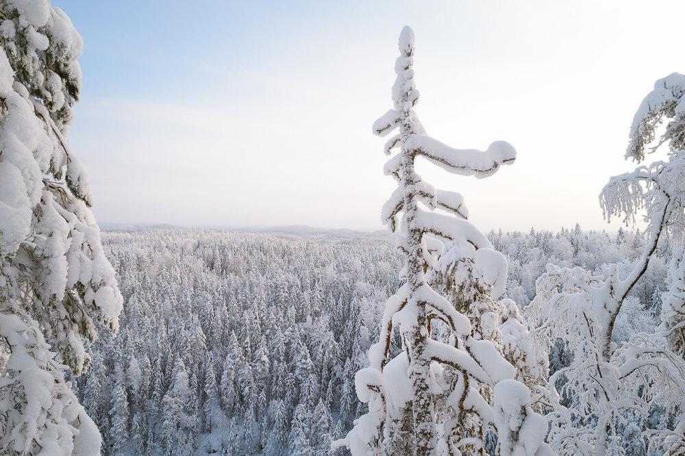 Southern Konnevesi National Park-13.jpg