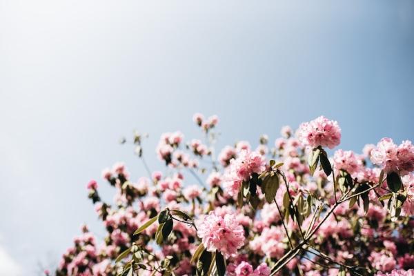 blossomflow.jpg