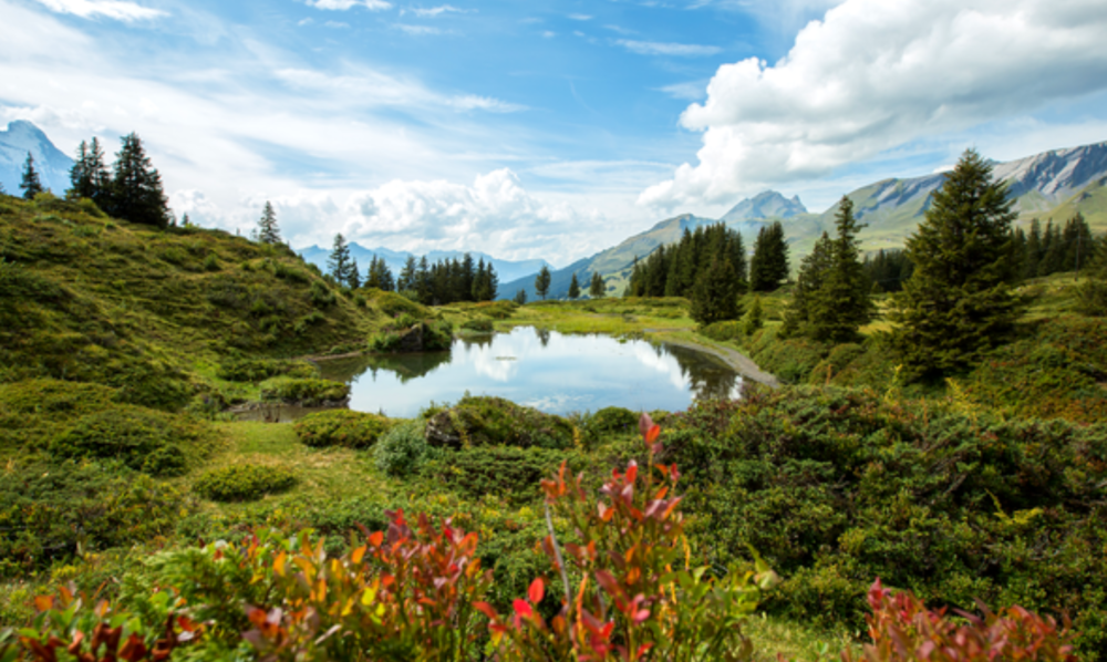 Bild Berner Oberland orig.png