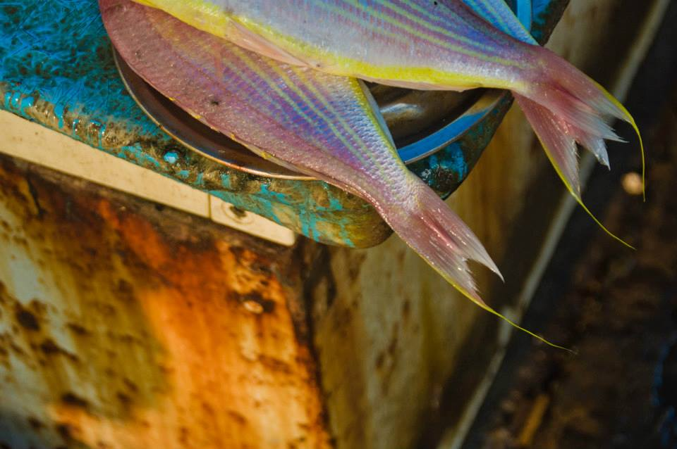 Fish Market Kochi, India