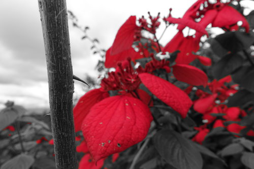 red-flowers.jpeg