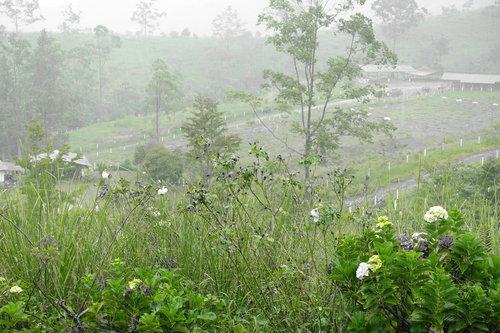 meadow.jpeg