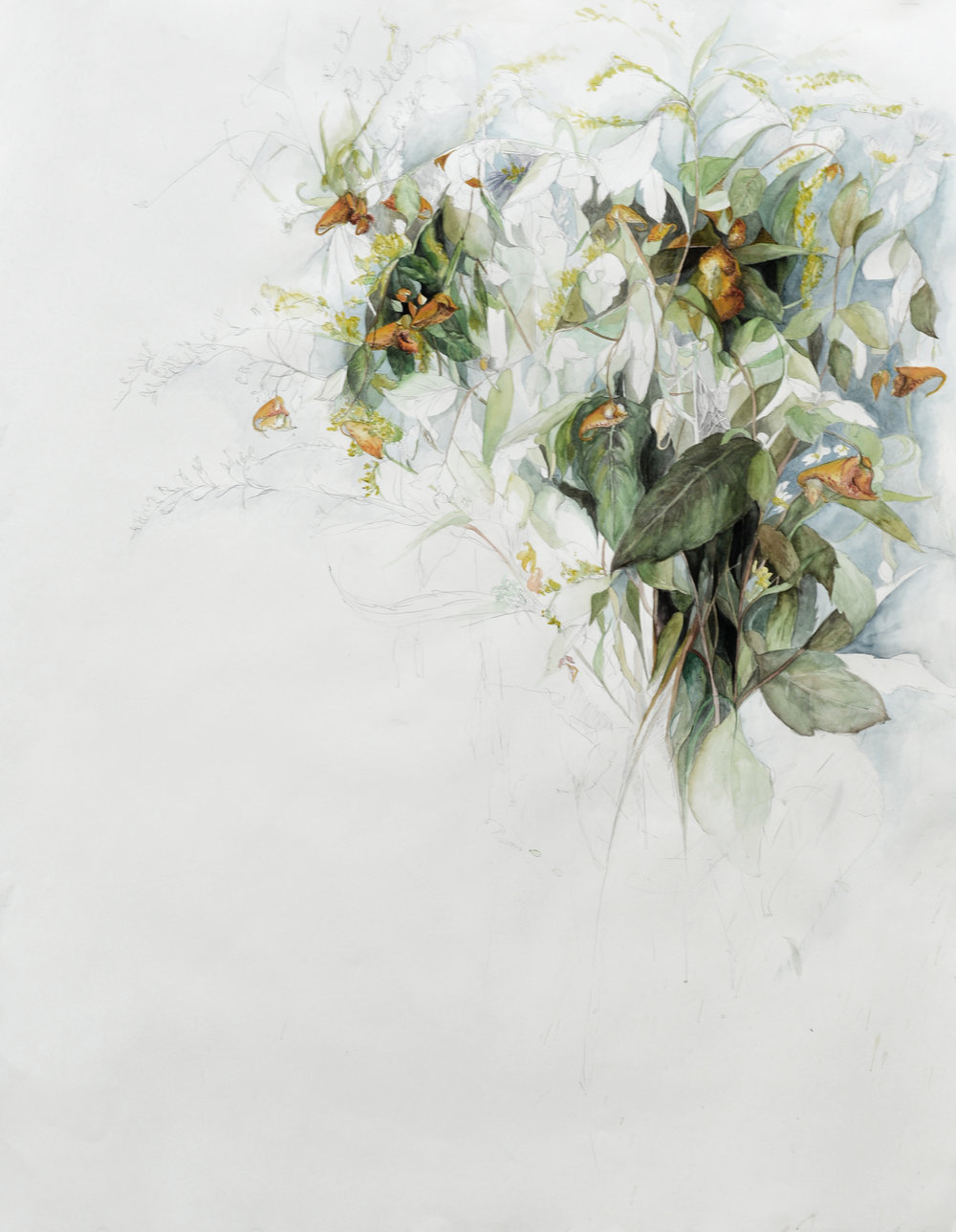 "Flowers No. 5 , Watercolor and pencil on paper, 38"" x 50"" (2016)"