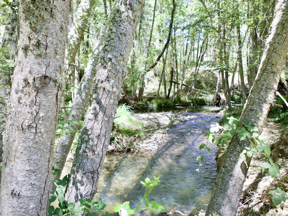 Mandala Springs Creek