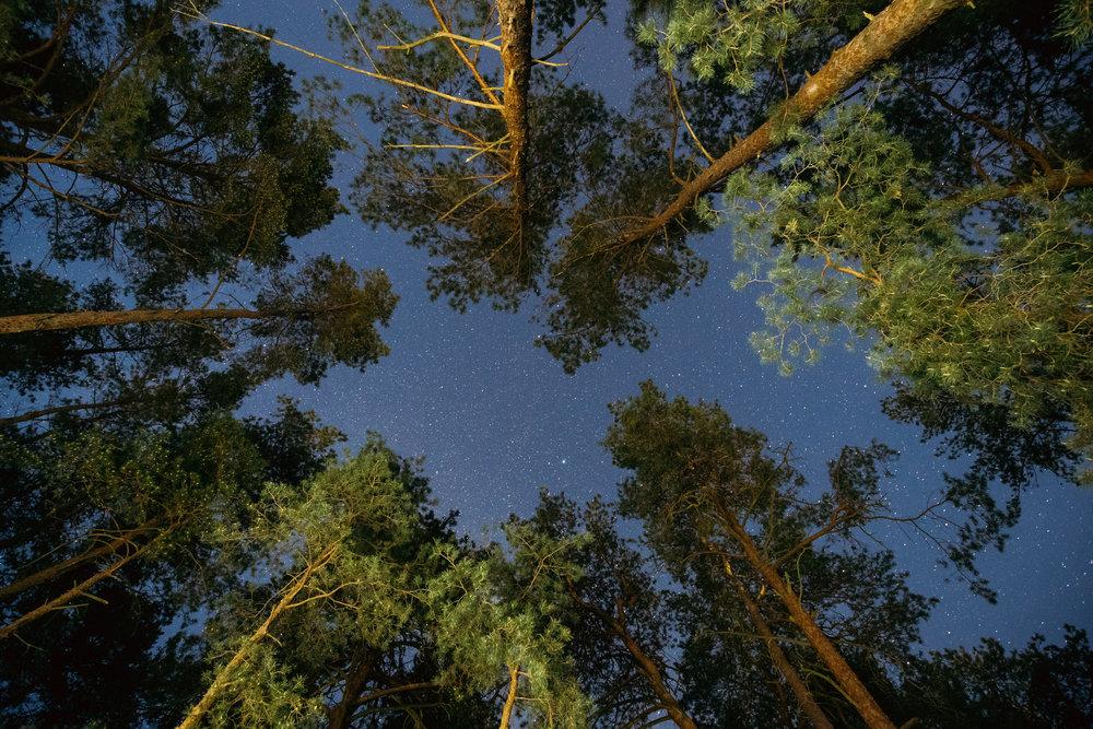 natural-real-night-starry-sky-above-green-pine-PEMX9HA.jpg