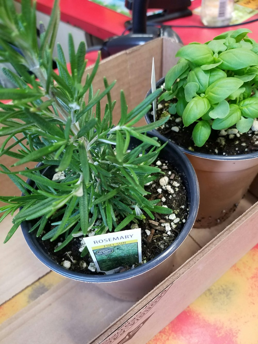 fresh herbs from nursery