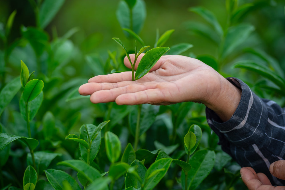 TEEMA Hand with leaves.jpg