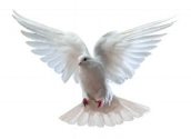 The dove signifies the descent of Grace