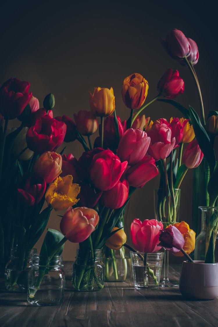 Spring has sprung - tulips