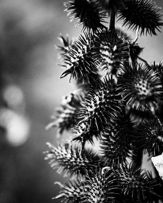 . #nature #valley #DC #america #instablackandwhite #black #landscape #photography #landscapephotography #art #scene #artist #design #visual #magic #love #adventure #spirit #imagine #free #flower #spike #thorn #texture #sharp